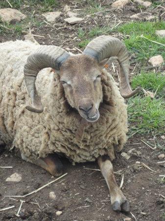 Cotswold Farm Park: !