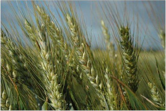 Agriturismo - Residenza Le Magnolie: il grano - Azienda Agricolia