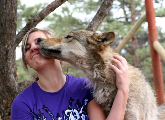 Colorado Wolf and Wildlife Center: RyLee gets a kiss