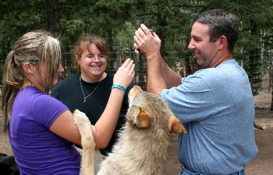 Colorado Wolf and Wildlife Center: GO WOLVES!