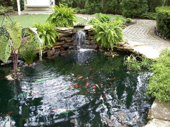 Historic Davy House B&B Inn: Davy House Koi Pond