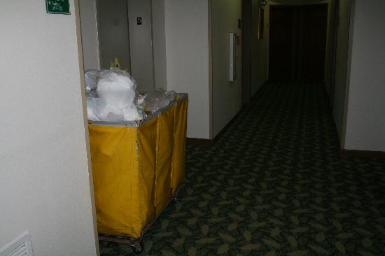 TownePlace Suites Atlanta Northlake: A standard hallway view.  The trash piled up in the elevators was much nastier.