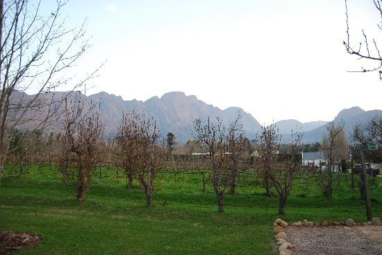 Bo La Motte Farm Cottages: winelands surrounding cottage