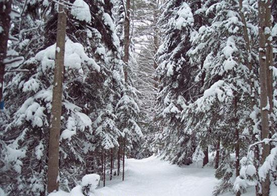 Стоу, Вермонт: Hardwood Ridge Trail at Wiessner Woods