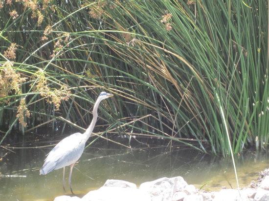 San Joaquin Wildlife Santuary
