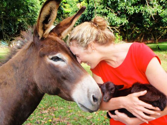 Haiku, HI: Cuddling with goats and donkeys