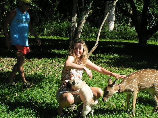 Haiku, HI: Dogs and deer all want a pet!