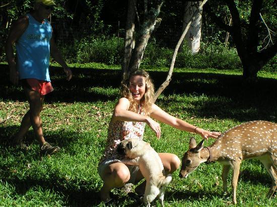 Haicai, Havaí: Dogs and deer all want a pet!