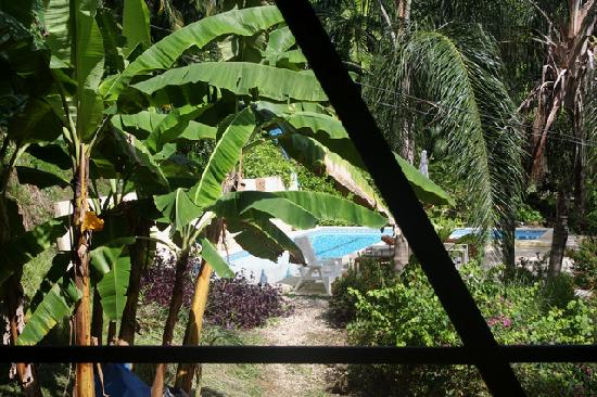 Funky Monkey Lodge: view from our studio