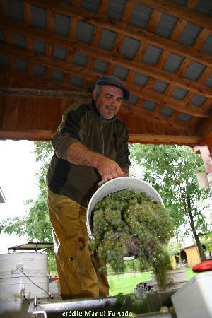La Route des Vins: la cueillette