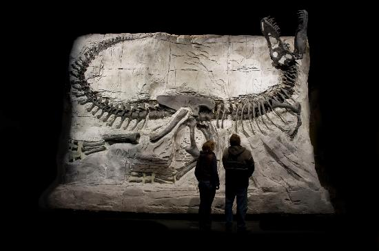 Royal Tyrrell Museum of Palaeontology: Black Beauty