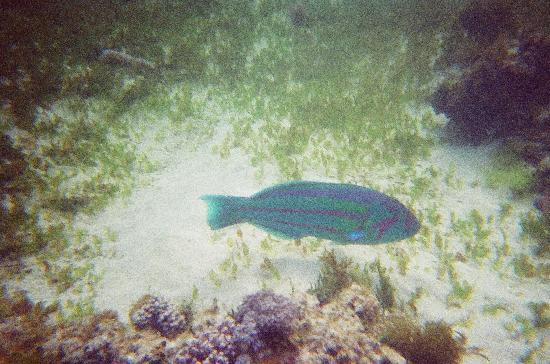 Ned's Beach : Fishy fish