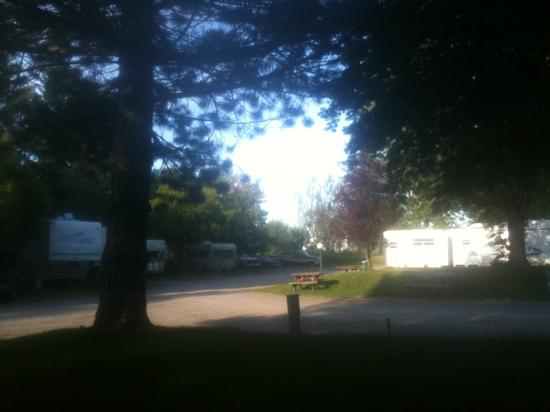 Suntree RV Park : Lots of shade, good price, friendly people.