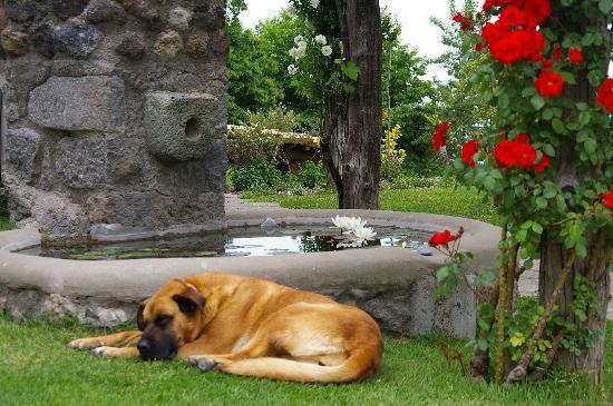 Pera di Basso Agriturismo : Ein Wachhund braucht auch Erholung