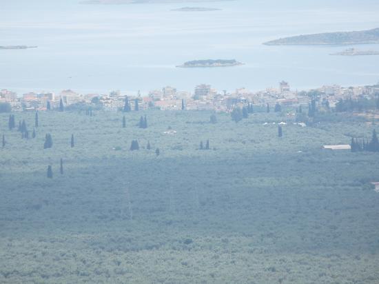 Castri Hotel: vue de la chambre sur les oliviers jusqu'à la mer