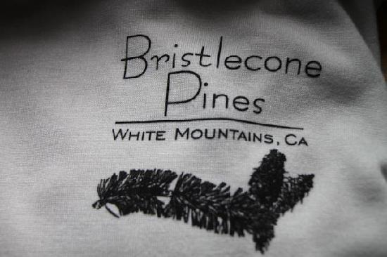 Ancient Bristlecone Pine Forest: T shirt available in Vistors Center