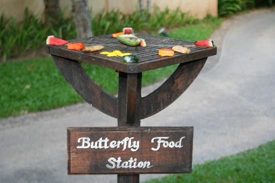 Nora Beach Resort and Spa: butterfly station