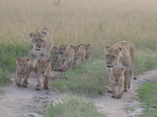 Mara Bushtops: The school run