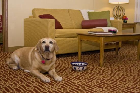TownePlace Suites Fresno: Pet Friendly