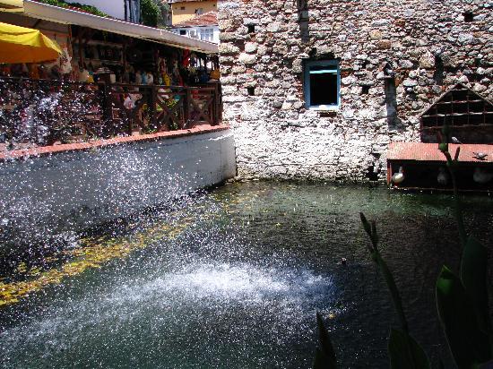 DuckPond : The pond