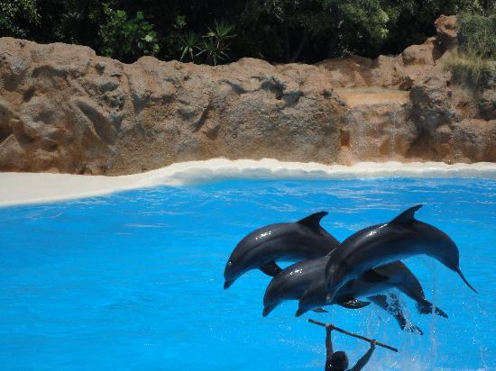Roca Nivaria GH - Adrian Hoteles: Dolphin show at Loro Park