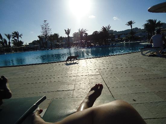 El Mouradi Djerba Menzel: le chat de la piscine