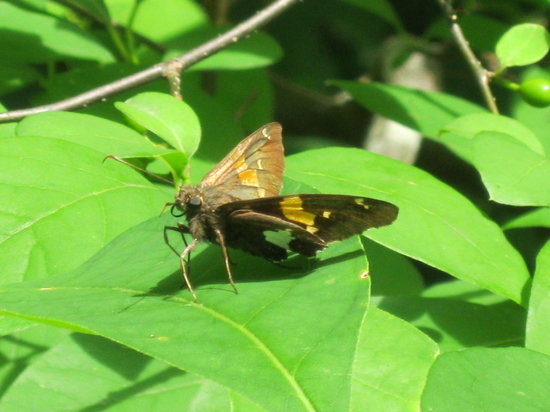 Wintergreen, VA: Butterfly