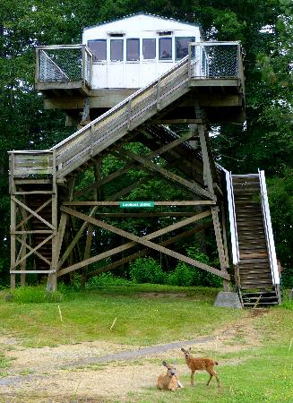 Duncan, Canada: Forest Fire Lookout Tower for visitors to climb!
