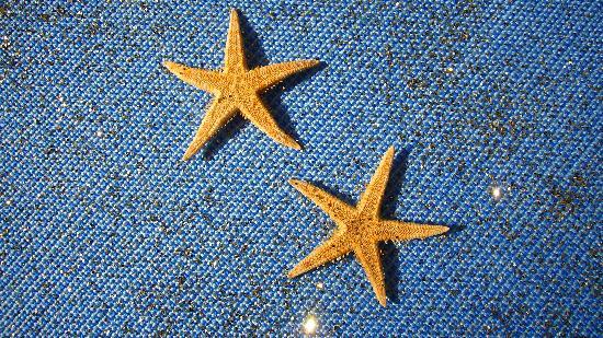 Hotel Solitude: Due stelle brillanti