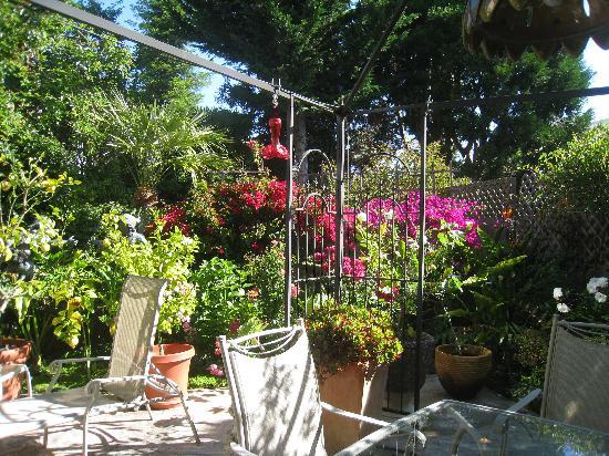 Noe's Nest Bed and Breakfast: The Garden