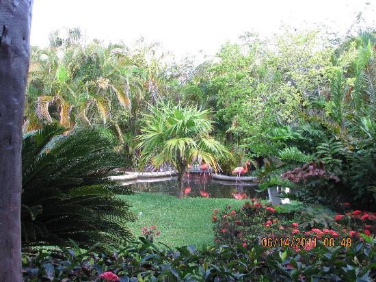 Iberostar Cozumel: front lobby view
