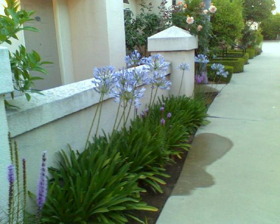 Garden Inn and Suites: garden