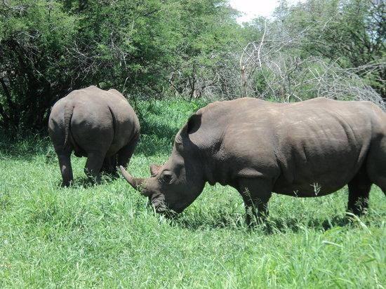 Kruger Flexi Tours - Day Tours: Mr Rhino