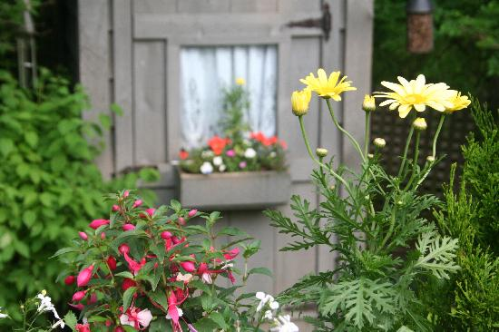 Haig Street Bed and Breakfast: beautiful garden shot taken by my 14-year old... just had to share!
