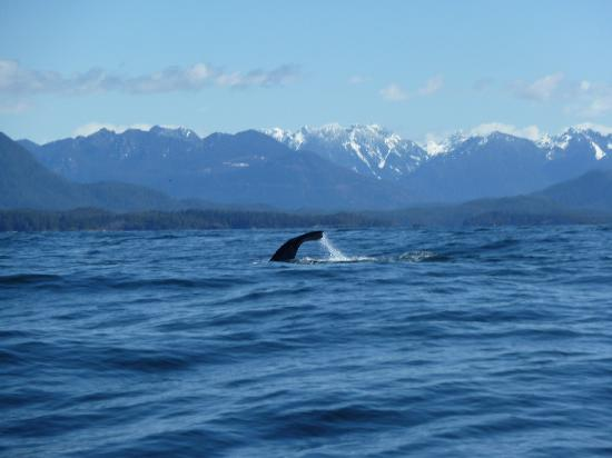 Discover Canada Tours: Tofino Whale Watching