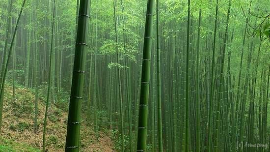 Kitakyushu, Japón: 平尾台