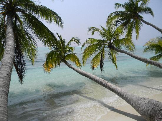 Lakshadweep Homestay Kasim K: Beach at Tinaguda island