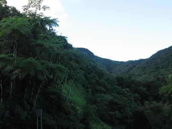 San Juan, Puerto Rico: El Yunque National Park