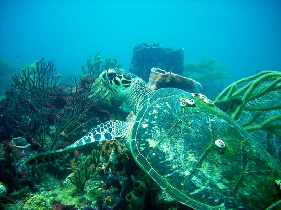 Private Scuba Lessons: Travel with the Turtle