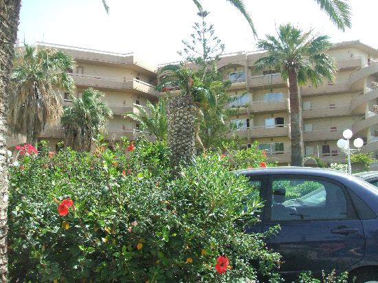 Sun Beach Resort Complex: Pleanty of flower!