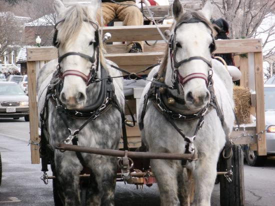 Sherwood Inn: Take the horse and buggy ride!