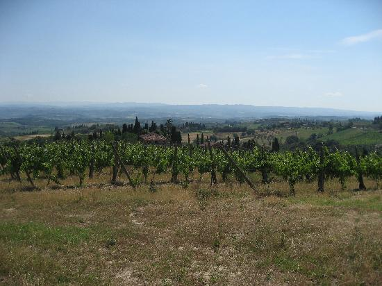 Il Casale del Cotone : View of hotel from vineyards above.