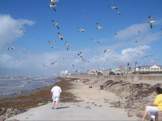 Crazy Dancing Tourist Under Hungry Seagulls Picture Of
