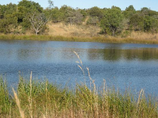 Mabula Private Game Reserve, Afrika Selatan: the lake at mabula