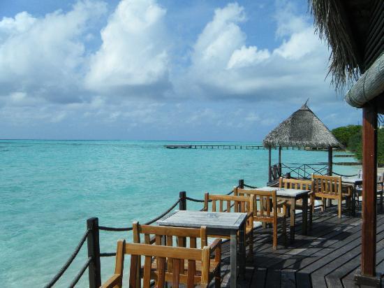 Gasfinolhu Island Resort: bar