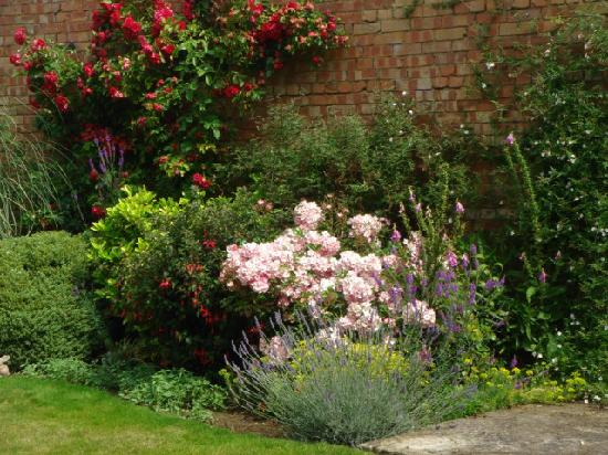 Arden House Bed & Breakfast Bexhill: Back garden