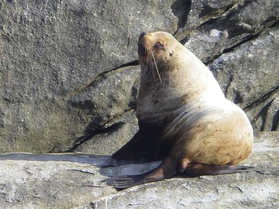 AAA Captain Black Bart Charters : Big Seal Sunning him(or her?) self