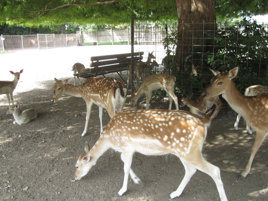 Sandusky, OH: Some of the deer