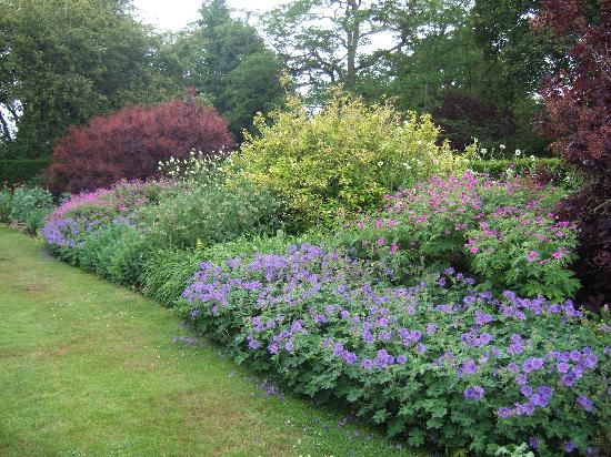 Goddards House and Garden : Lovely herbaceous borders