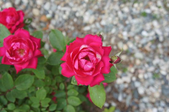 Snapdragon Inn: las floras